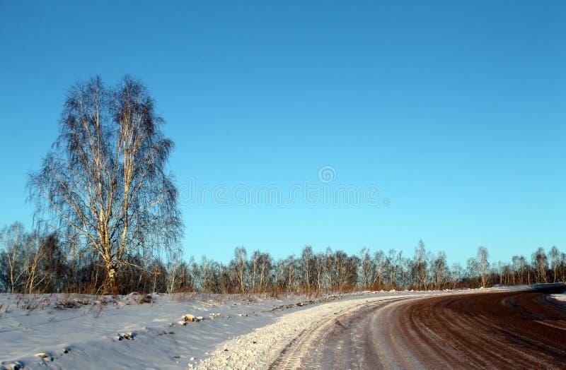 Paisagem do inverno - as árvores gelados na estrada de floresta nevado em um inverno bonito da floresta maravilhosa do inverno aj imagens de stock royalty free
