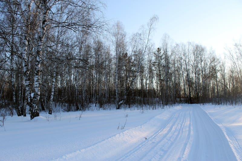 Paisagem do inverno - as árvores gelados na estrada de floresta nevado em um inverno bonito da floresta maravilhosa do inverno aj imagem de stock royalty free