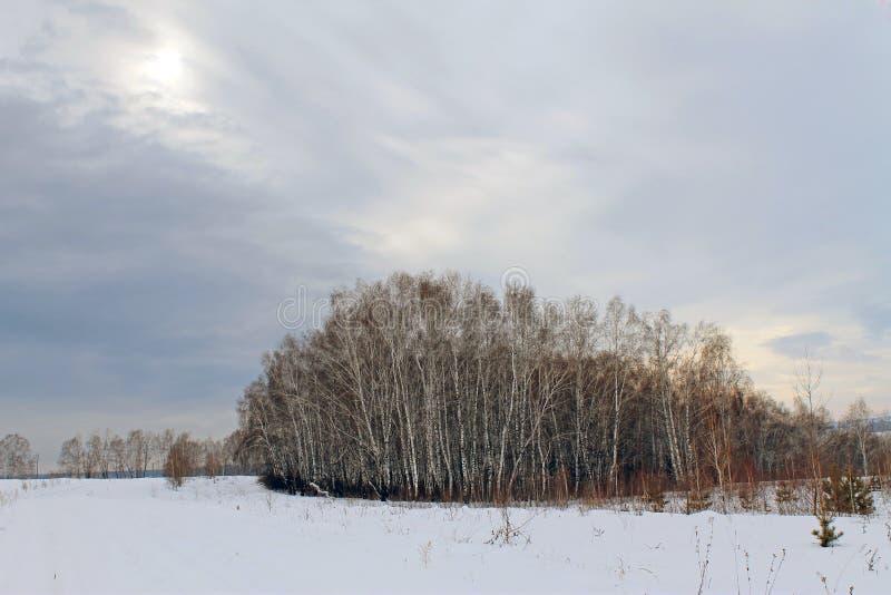 Paisagem do inverno - as árvores gelados na estrada de floresta nevado em um inverno bonito da floresta maravilhosa do inverno aj imagem de stock
