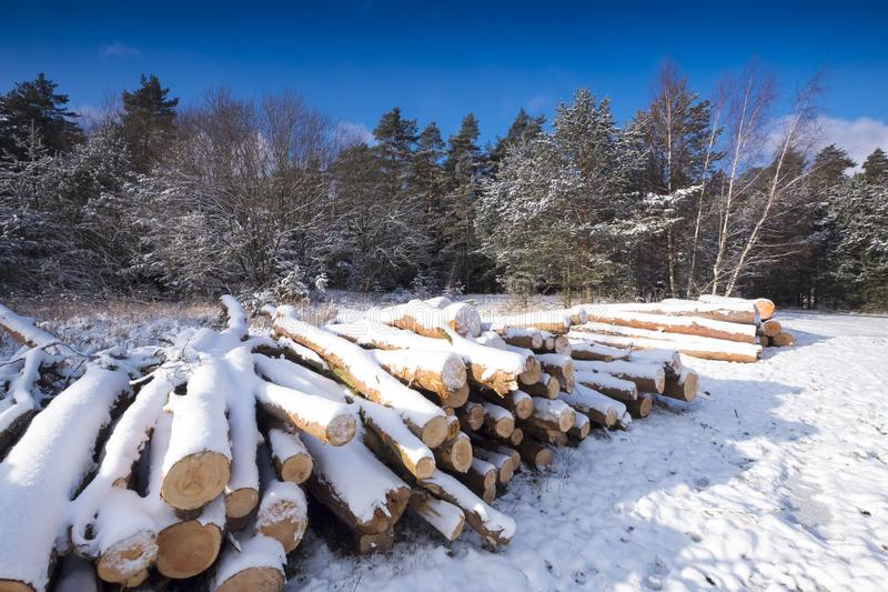 Paisagem do inverno coberta pela neve imagem de stock