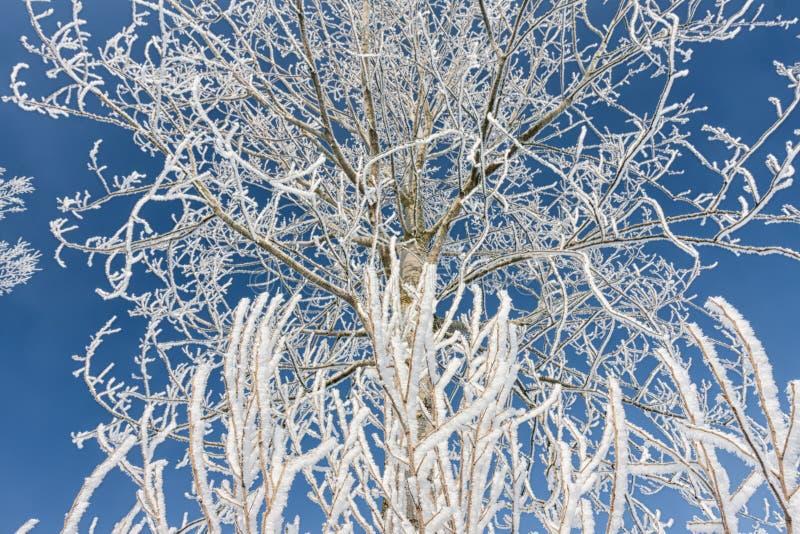 Paisagem do inverno com a árvore coberta com a geada e o céu azul fotos de stock