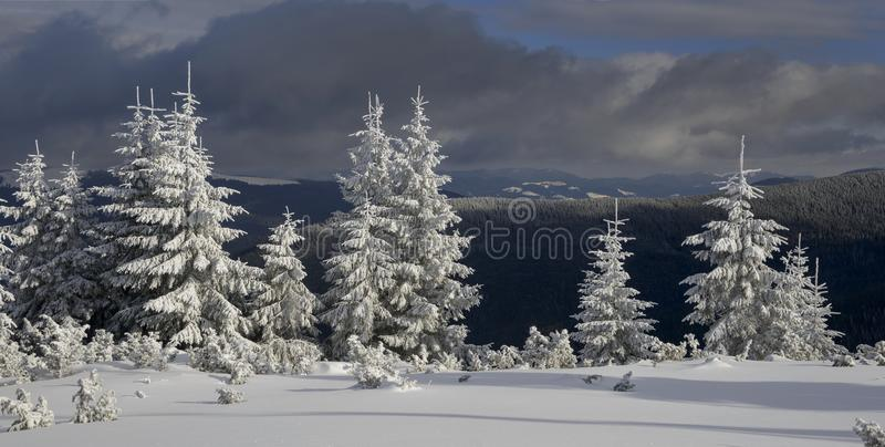Paisagem do inverno com abeto ensolarados imagens de stock