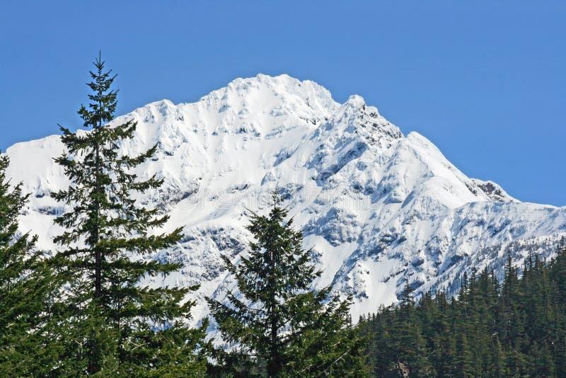 Paisagem do inverno com abetos vermelhos e montanhas imagens de stock