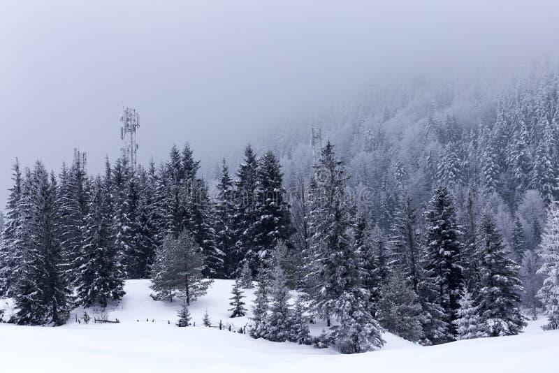 Paisagem do inverno com as árvores cobertas com a neve em um vall da montanha foto de stock royalty free