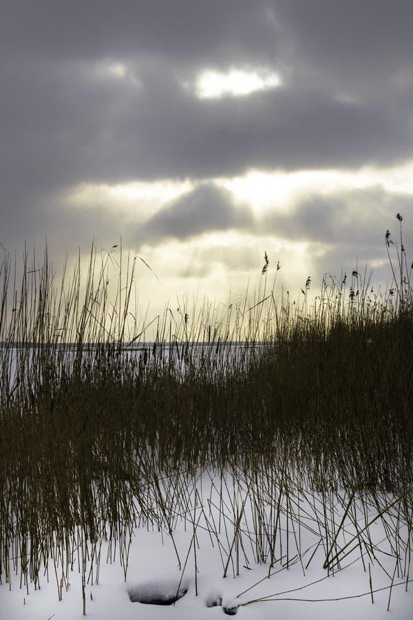 Paisagem do inverno com o campo nevado do inverno e as plantas congeladas na grama e em juncos altos do por do sol pelo lago cong fotografia de stock