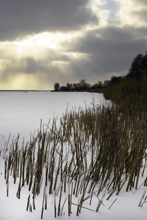 Paisagem do inverno com o campo nevado do inverno e as plantas congeladas na grama e em juncos altos do por do sol pelo lago cong fotos de stock