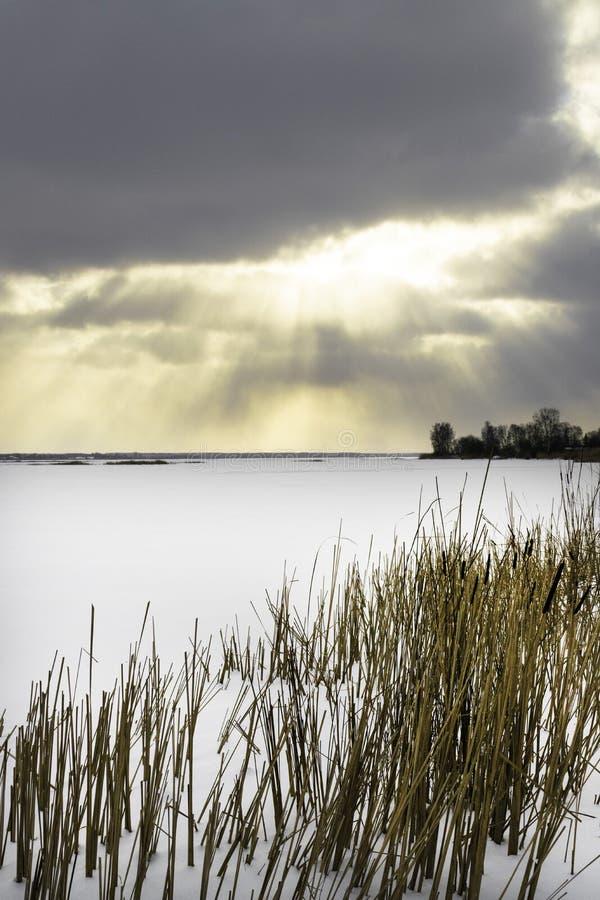 Paisagem do inverno com o campo nevado do inverno e as plantas congeladas na grama e em juncos altos do por do sol pelo lago cong imagem de stock