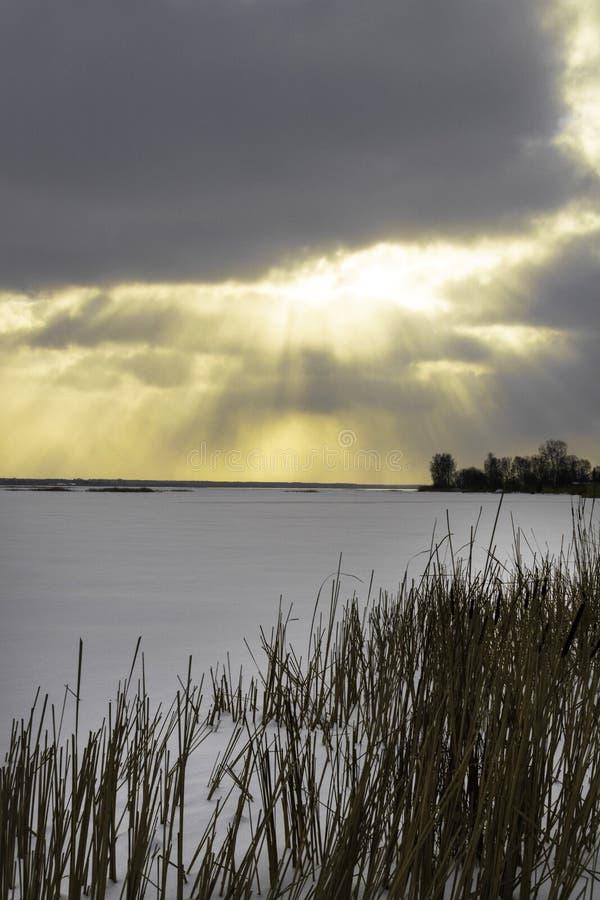Paisagem do inverno com o campo nevado do inverno e as plantas congeladas na grama e em juncos altos do por do sol pelo lago cong foto de stock royalty free