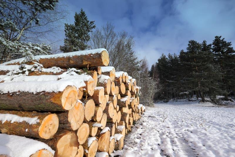 Paisagem do inverno com os logs cortados cobertos pela neve fotos de stock