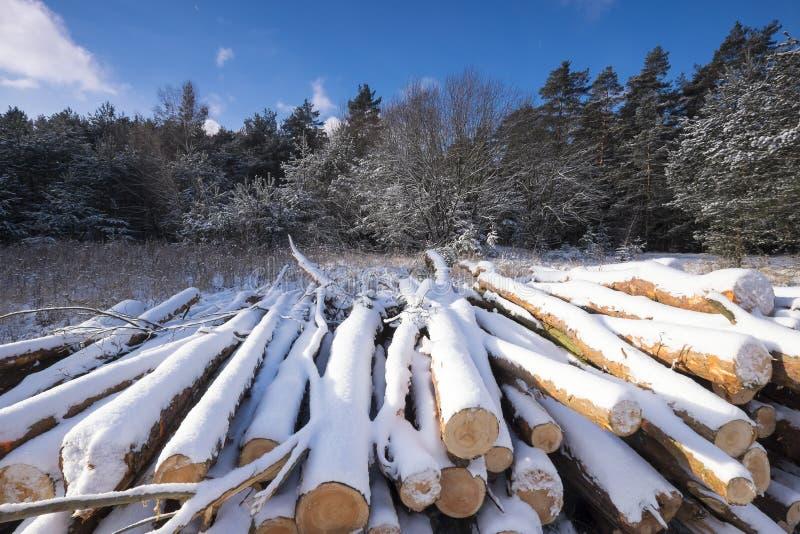 Paisagem do inverno com os logs cortados cobertos pela neve imagem de stock