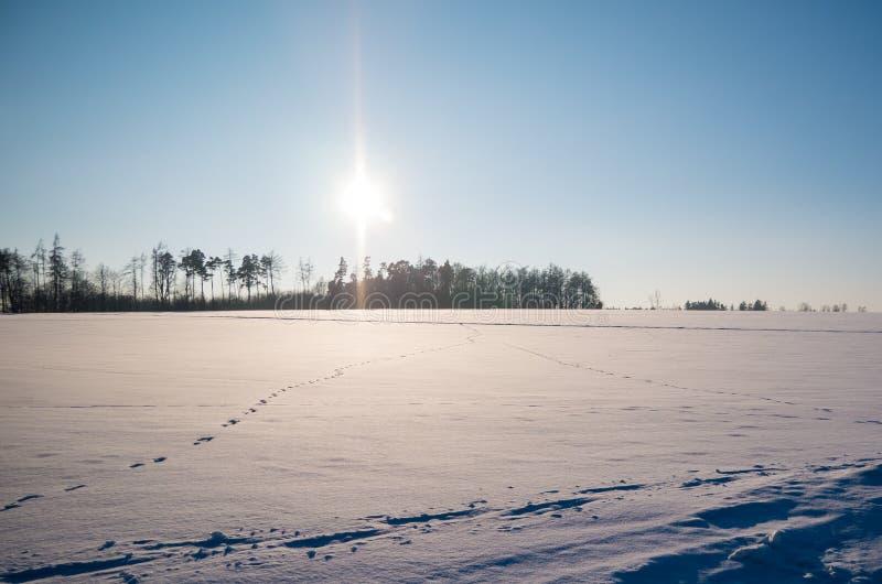 Paisagem do inverno com pegadas na neve fotografia de stock