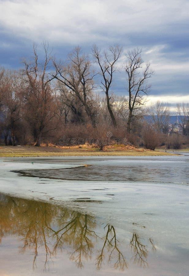 Paisagem do inverno com reflexão das árvores imagem de stock royalty free