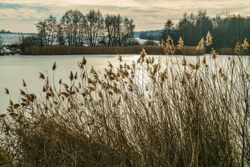 Paisagem do inverno com um lago congelado e os juncos imagens de stock