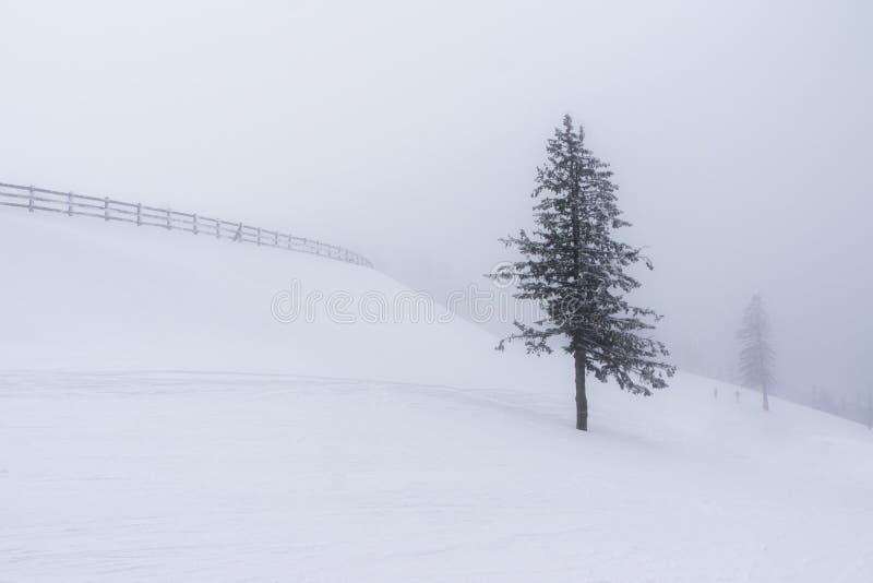 Paisagem do inverno com uma cerca em um dia nebuloso fotos de stock