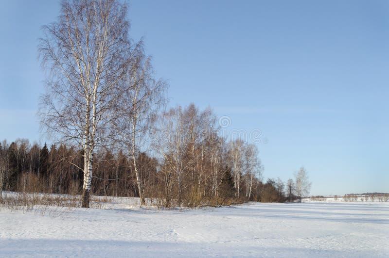 Paisagem do inverno com vidoeiros desencapados imagem de stock royalty free