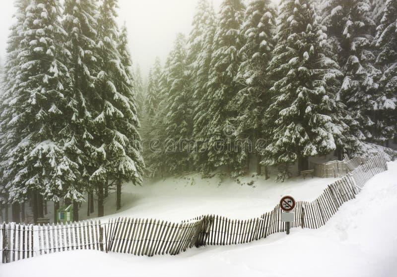 Paisagem do inverno da floresta dos abetos coberta na neve - Vosges, França foto de stock