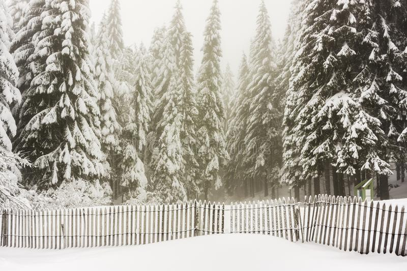 Paisagem do inverno da floresta dos abetos coberta na neve - Vosges, França fotografia de stock