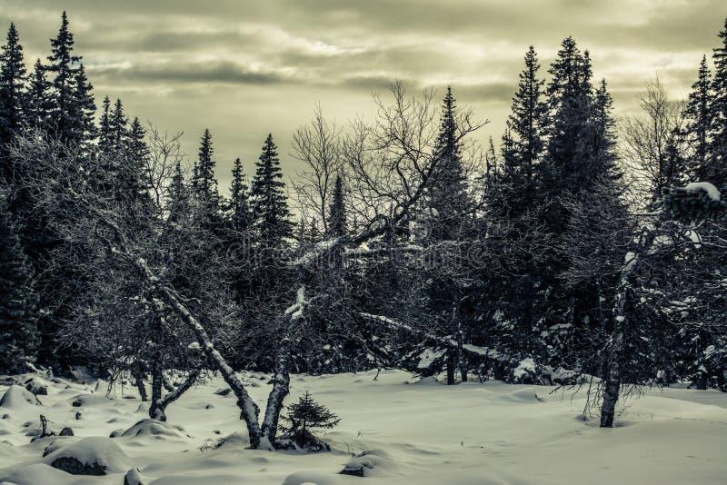 Paisagem do inverno da floresta em uma noite nebulosa fotografia de stock royalty free