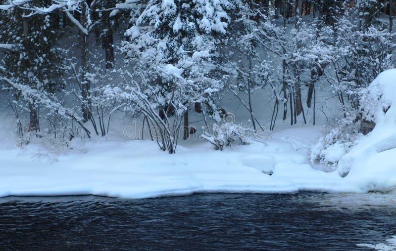 Paisagem do inverno das árvores da neve do rio foto de stock royalty free