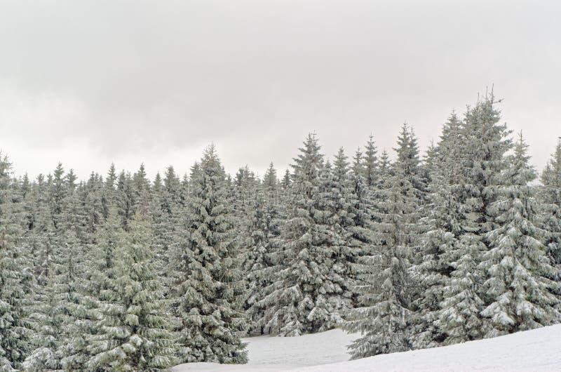 Paisagem do inverno de montanhas florestados na região de Harz, Alemanha fotografia de stock