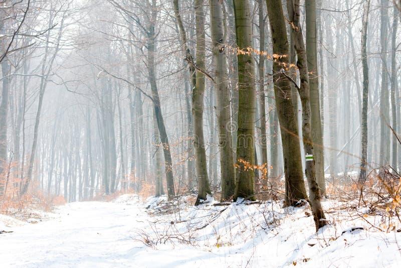 Paisagem do inverno de uma floresta fotos de stock royalty free