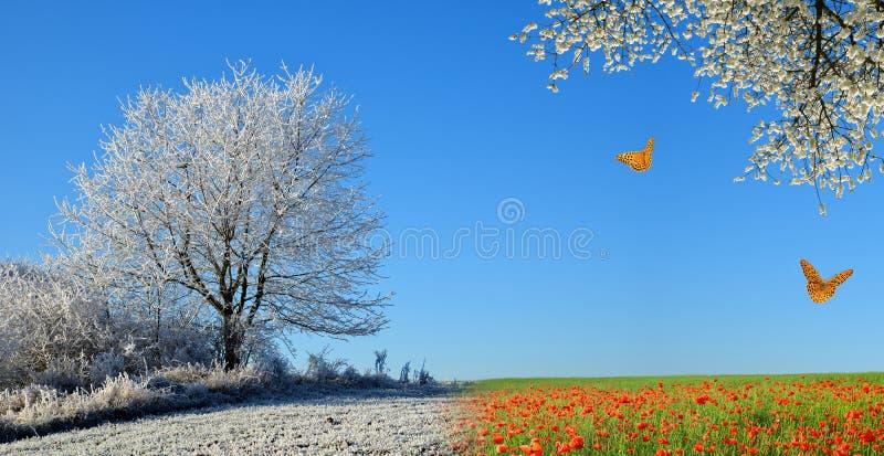 Paisagem do inverno e da mola com céu azul foto de stock royalty free