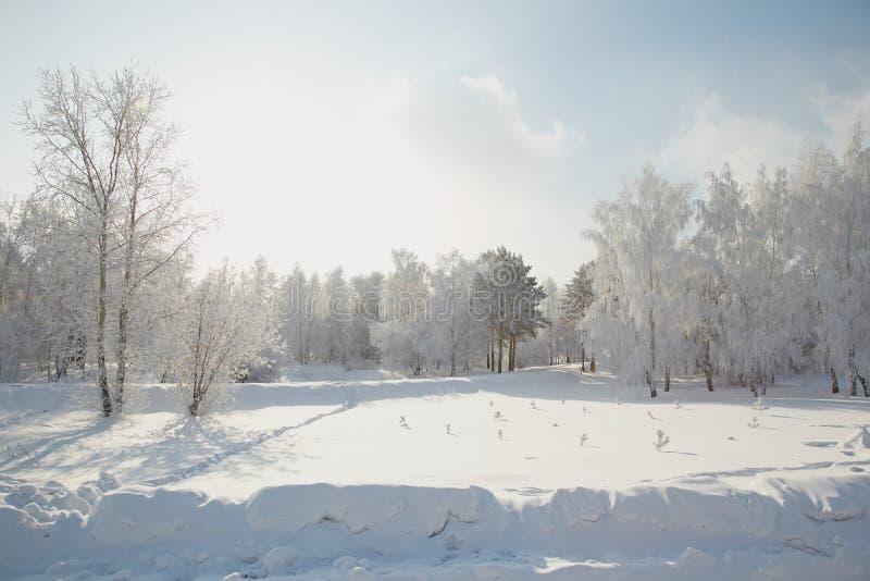 Paisagem do inverno em Sibéria foto de stock royalty free