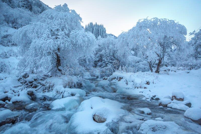 Paisagem do inverno em tons cor-de-rosa, com o rio calmo do inverno, cercado por árvores Floresta do inverno no rio no por do sol imagem de stock