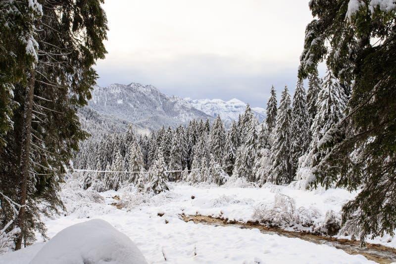 Paisagem do inverno em Val Canali fotografia de stock royalty free