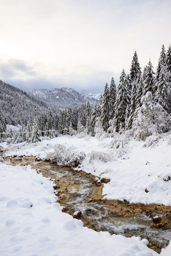 Paisagem do inverno em Val Canali imagem de stock royalty free