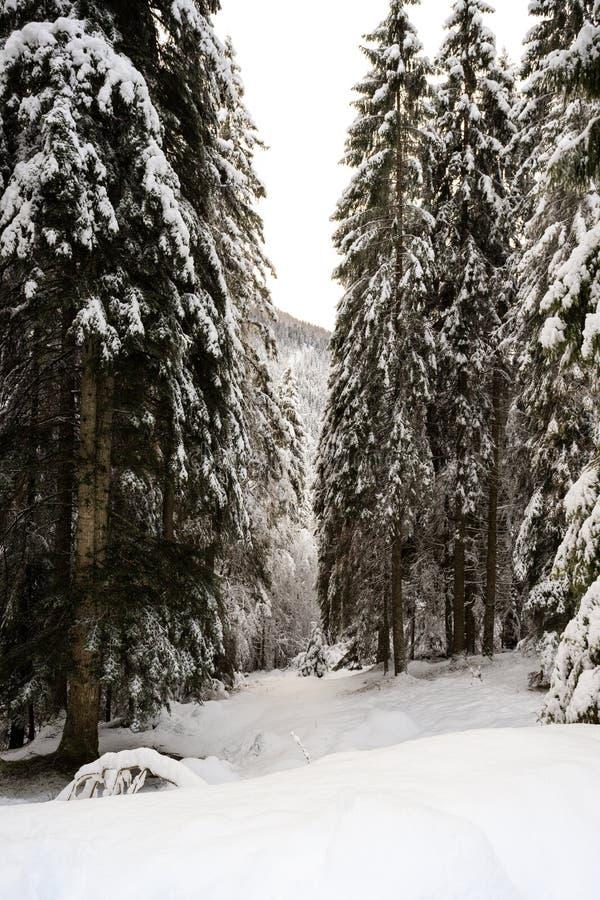 Paisagem do inverno em Val Canali foto de stock royalty free