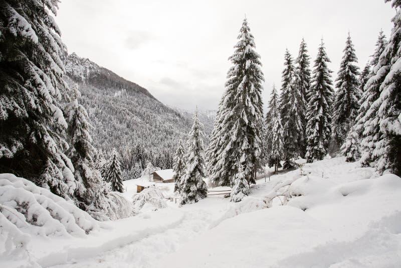 Paisagem do inverno em Val Canali imagens de stock royalty free
