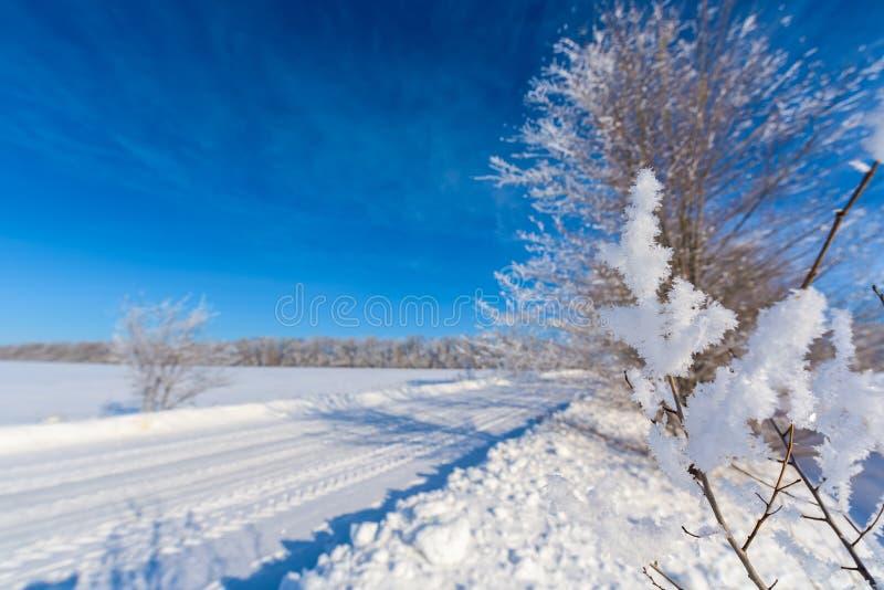 Paisagem do inverno estrada nevado branca, céu azul, árvores cobertas com a geada foto de stock royalty free