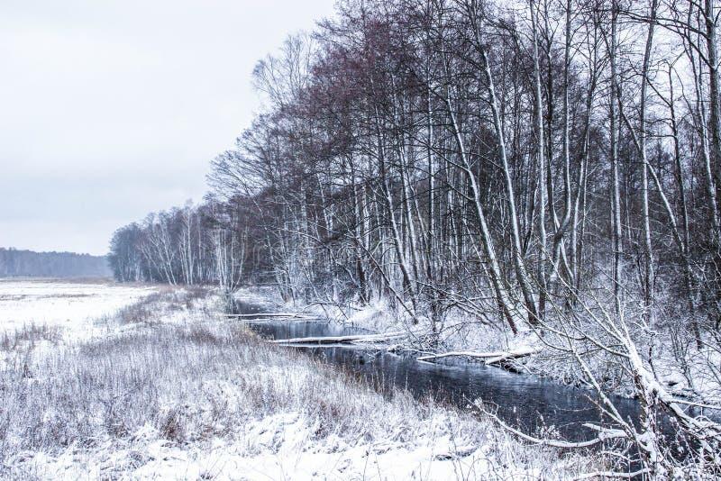 Paisagem do inverno: floresta e floresta na neve fotografia de stock royalty free