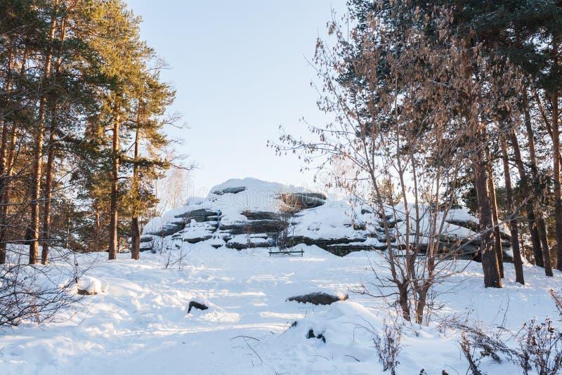 Paisagem do inverno Floresta ensolarado do pinho e pedras grandes cobertos de neve imagens de stock royalty free