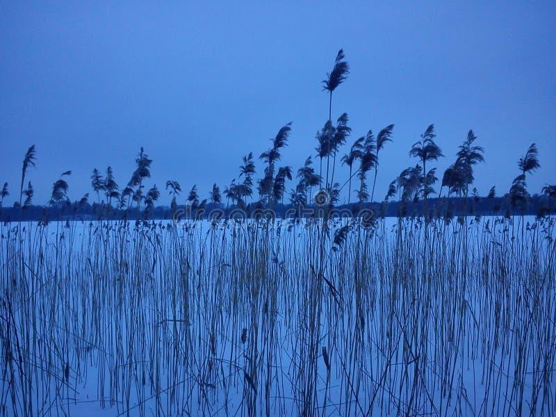Paisagem do inverno - hora azul fotos de stock royalty free