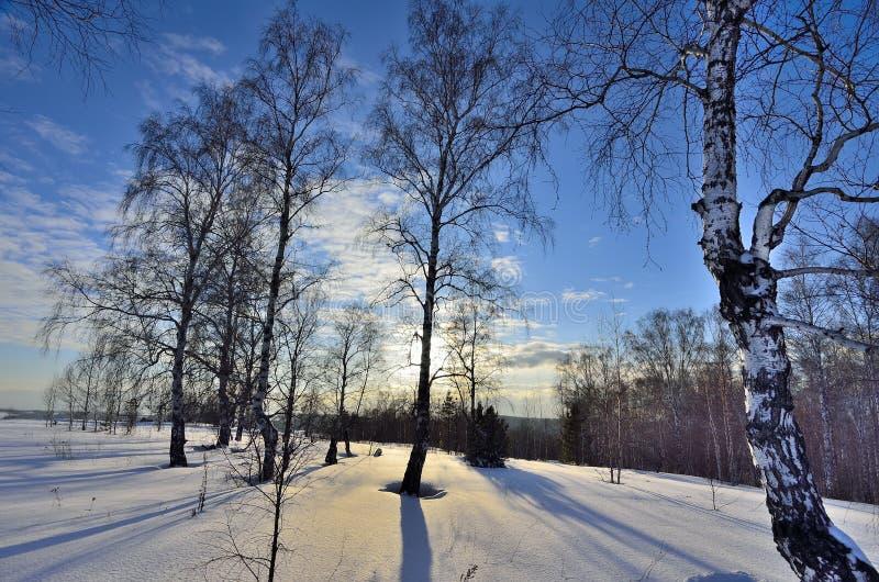 Paisagem do inverno na floresta imagens de stock