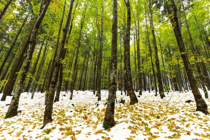 Paisagem do inverno na floresta no tempo do outono foto de stock