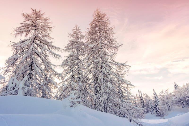 Paisagem do inverno nas montanhas Julian Alps, Eslovênia fotografia de stock