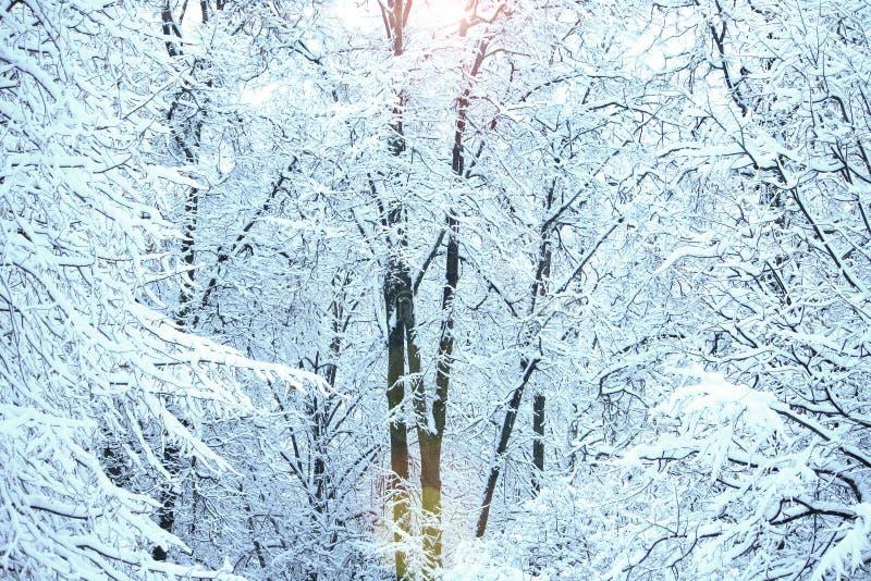 Paisagem do inverno no parque da cidade, árvores na neve imagem de stock royalty free