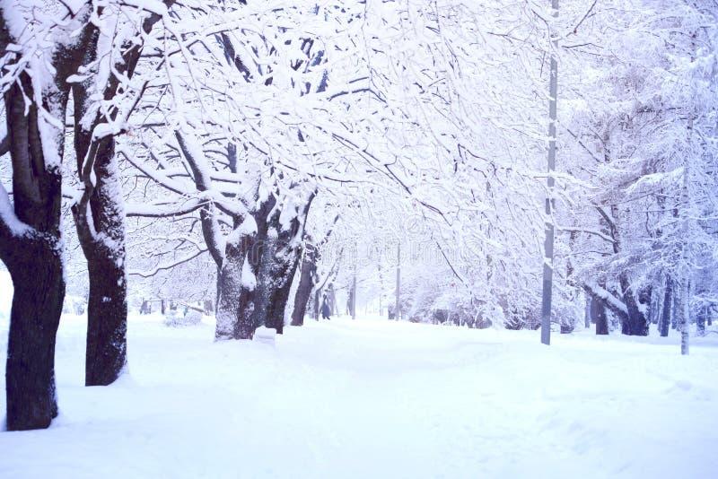 Paisagem do inverno no parque da cidade imagens de stock royalty free