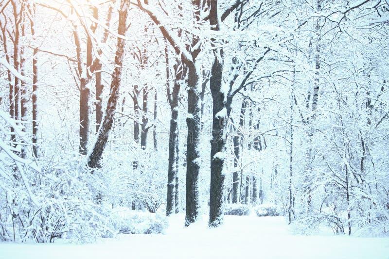 Paisagem do inverno no parque, nas árvores e nos arbustos da cidade na neve fotos de stock