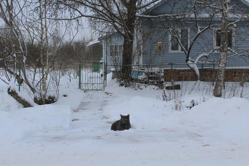 Paisagem do inverno O gato no ponto inicial Muita neve Esperando os anfitriões fria fome foto de stock