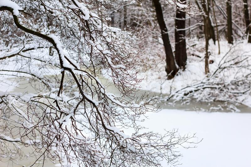 Paisagem do inverno Os ramos de árvores da floresta do inverno e o rio congelado cobriram a neve foto de stock