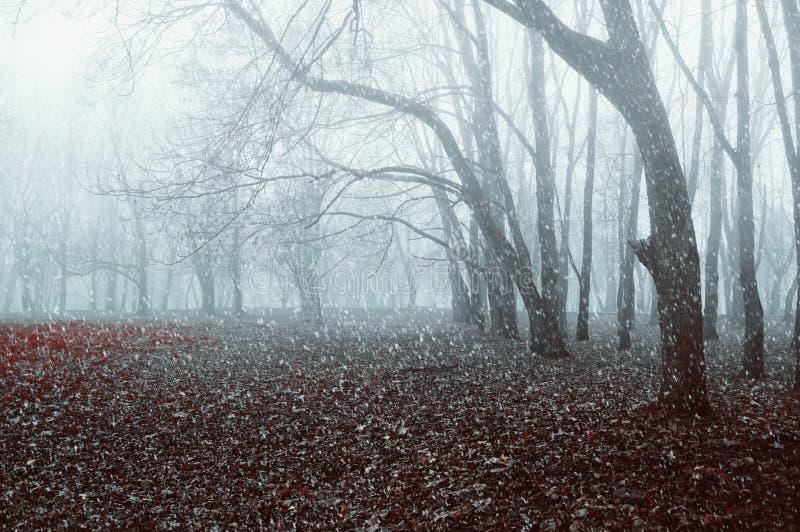 Paisagem do inverno Parque nevoento com a neve que cai nas folhas de outono secas imagem de stock