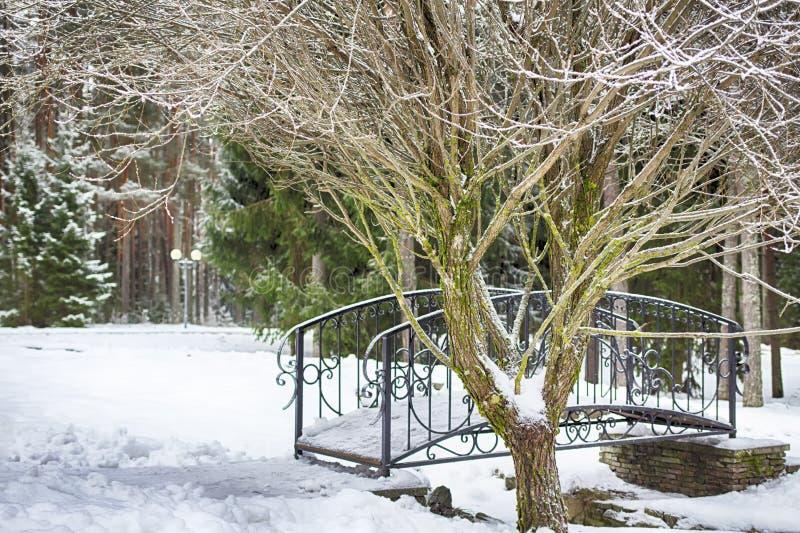 Paisagem do inverno, ponte decorativa sobre um córrego congelado Forest Panorama Parque da neve fotografia de stock royalty free
