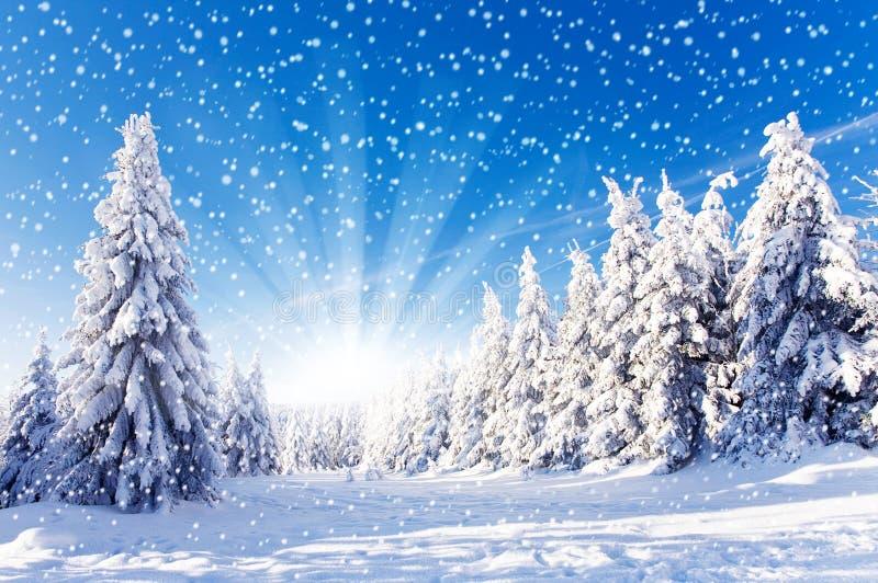 Paisagem do inverno - queda de neve imagem de stock