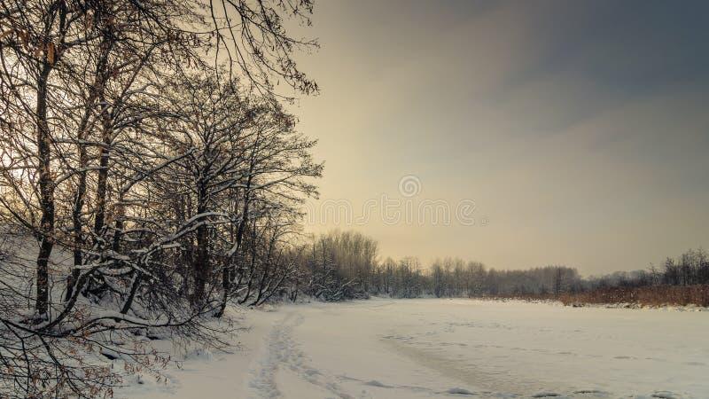 Paisagem do inverno Rio nevado congelado com as árvores litorais na luz morna do por do sol fotografia de stock