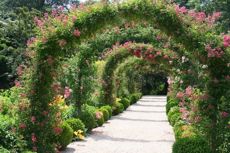 Paisagem do jardim de rosas foto de stock royalty free