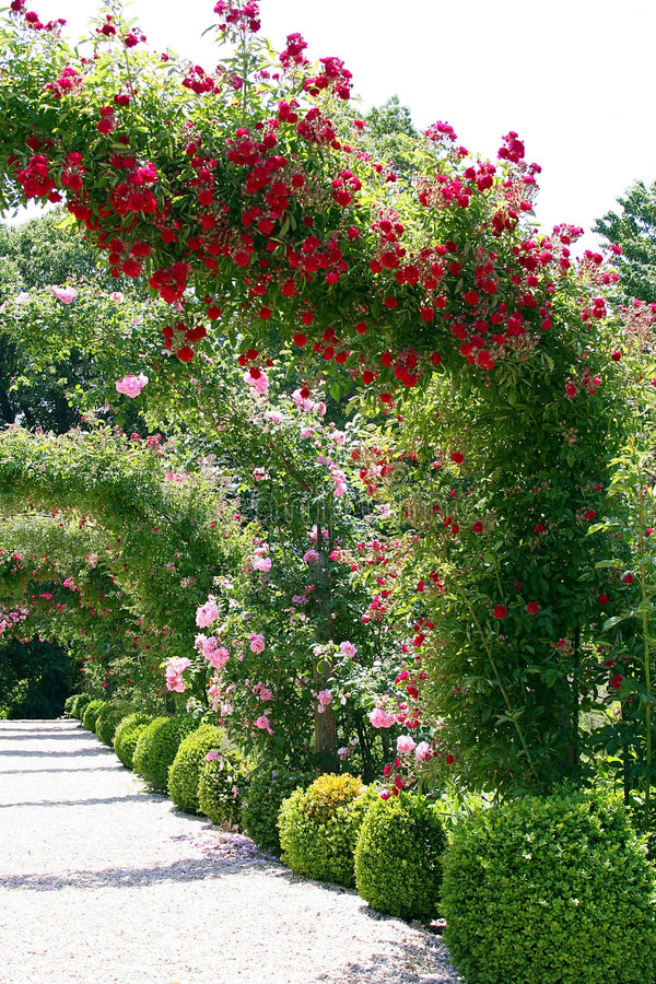 Paisagem do jardim de rosas imagem de stock royalty free